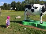 a cow wordpress