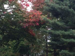 fall wordpress